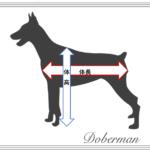 ペットの体長と体高の測り方