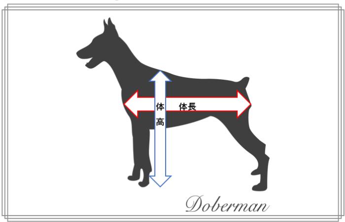 犬の体高と体長の画像